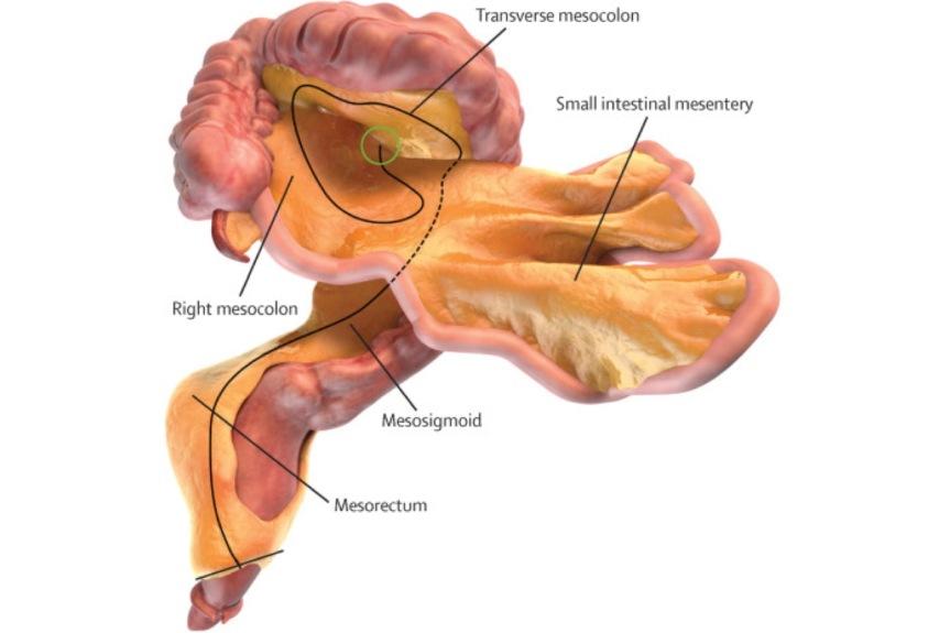 Scientists confirm a 'new' #human #organ via@engadget